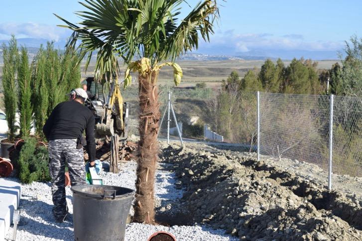 image-3 Tree Planting